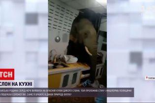 Новости мира: тайская семья ночью обнаружила на своей кухне дикого слона