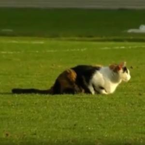 Розминалася з футболістами: кішка стала головною героїнею матчу Чемпіонату Білорусі