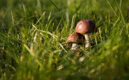 В Кременчуге годовалая девочка отравилась грибами, которые нашла во время прогулки в лесу с родителями