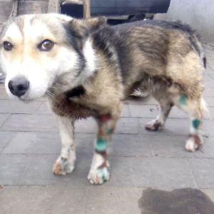 Тащил собаку за автомобилем: под Хмельницким закрыли уголовное производство относительно чиновника