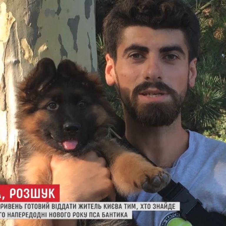50 тисяч гривень за друга: киянин розшукує свого вкраденого пса