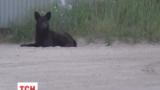 Социальные сети подорвало видео пса, который сидит у ворот горящей нефтебазы
