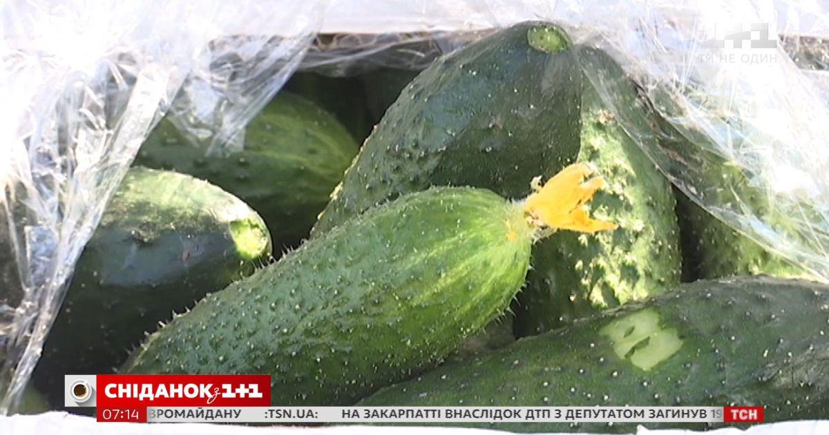 Украина впервые за всю историю импортировала огурцы в июле
