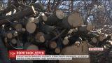 На Кировоградщине массово вырубают деревья, которые специально высаживали селяне