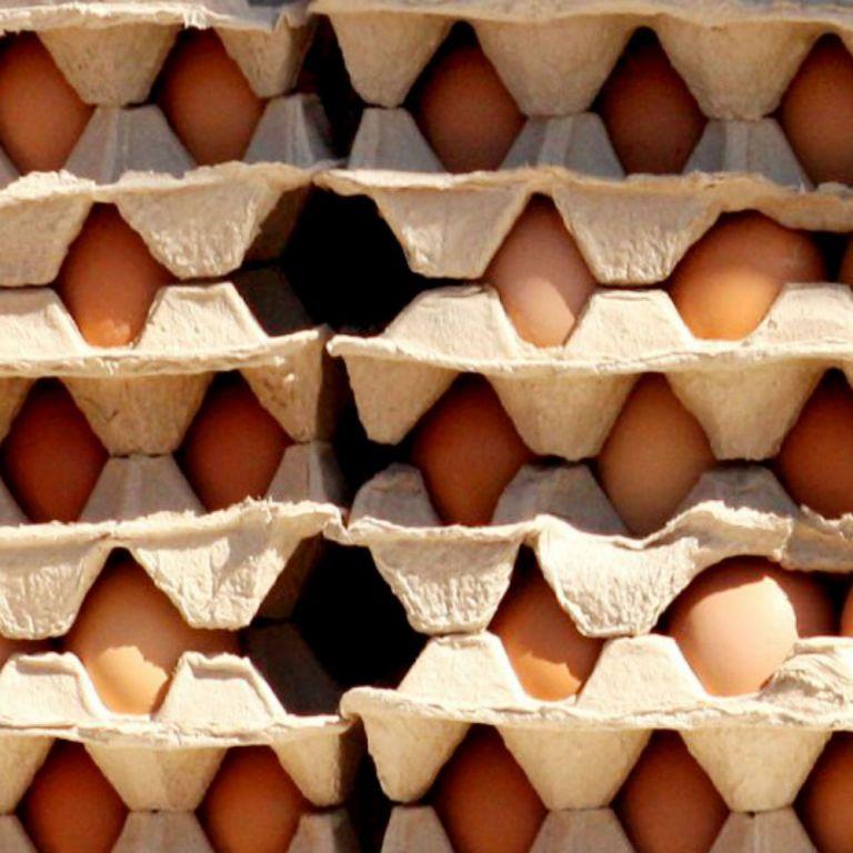 В Украине подешевели яйца: какие цены в регионах