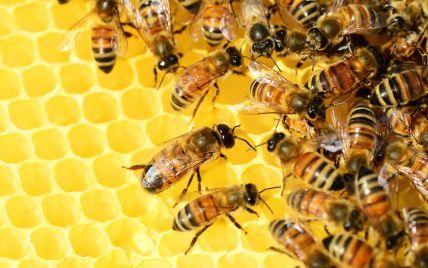"Краще займуться посилками: ""Укрпошта"" припинила доставку бджіл, але не всіх"