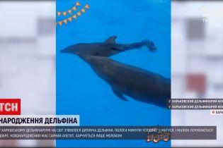 Новини України: харківський дельфінарій планує оголосити конкурс на краще ім'я для новонародженого