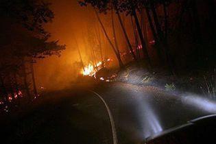 На Донеччині горить 77 га лісу
