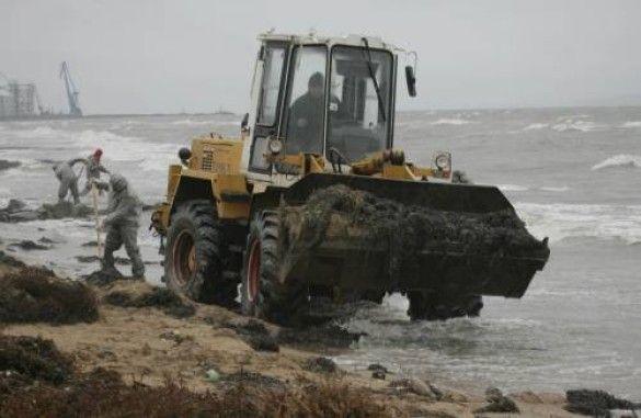 Екологічне лихо на морі