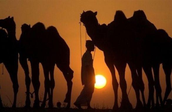 Ярмарок верблюдів у Пушкарі, Індія