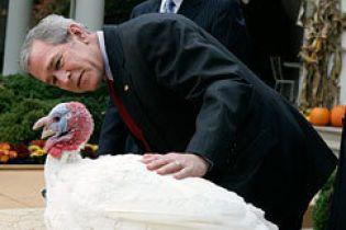 Буш помилував індичок