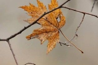 Погода в Україні на середу, 11 листопада