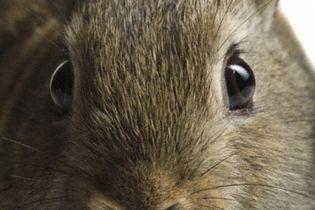 У Білорусі через теплі зими потерпають зайці