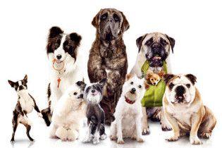Собаки вчитимуть українців родинних цінностей