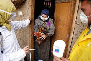 У Єгипті зафіксований 60-й випадок зараження людини пташиним грипом