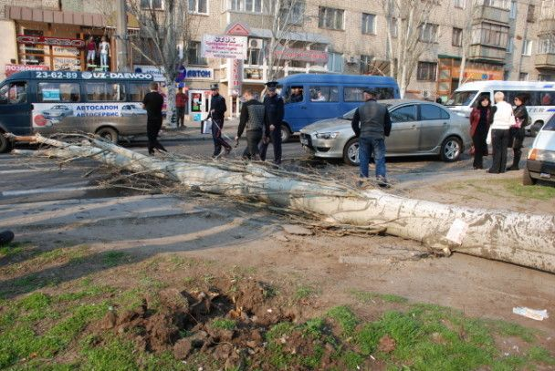 В центрі Миколаєва на автомобіль впало дерево