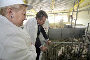 Ющенко вважає імпортне м'ясо трагедією