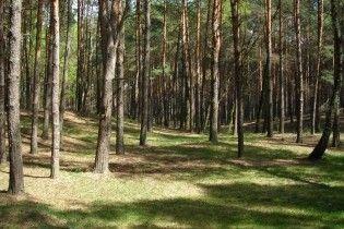 На травневі свята українців не будуть пускати в ліси