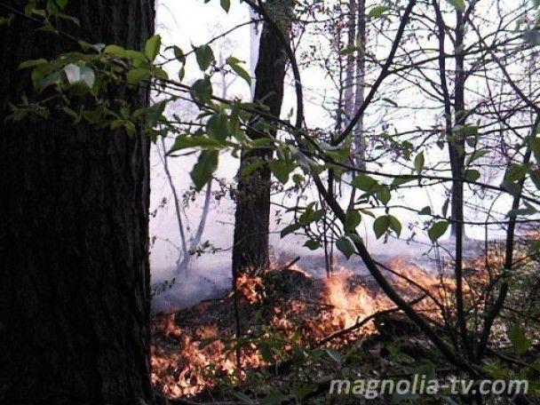 Лісові пожежі підбираються до Києва