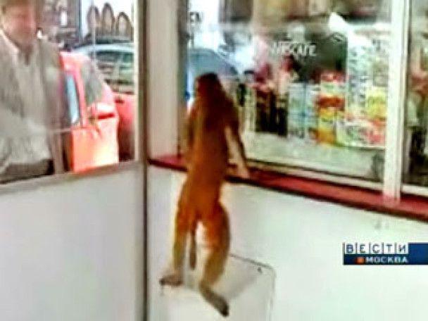 В центрі Москви розгулювали голодні мавпи