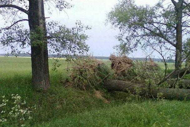 Чернігівщину атакував смерч