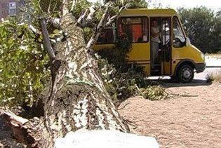 В Макіївці тополя впала на маршрутку з людьми