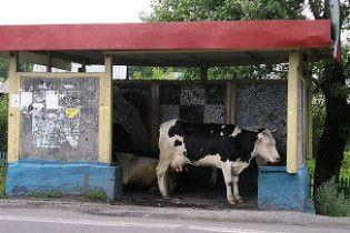 На російських зупинках поставили турнікети для корів