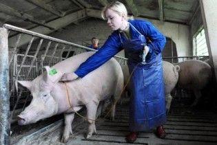 """На свинячий грип захворіли 60 білорусів, але у них """"епідемії немає"""""""