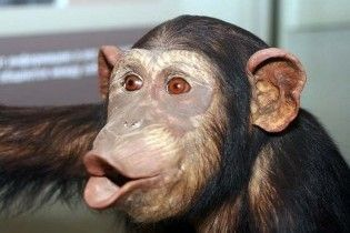 В російському зоопарку мавп поять кагором для профілактики грипу