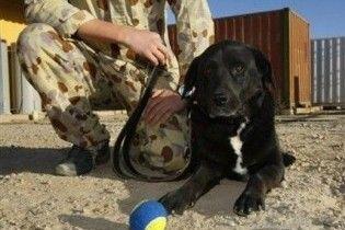 У Афганістані через рік після зникнення знайдений службовий пес