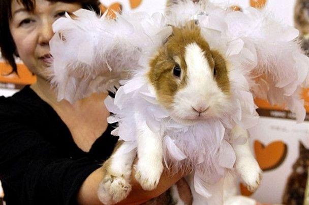 Модний показ для кролів у Японії