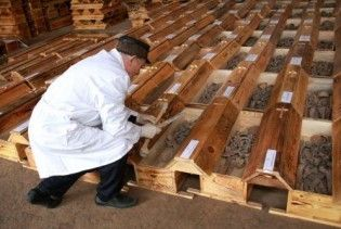 У Львові перепоховали останки 602 жертв Голодомору