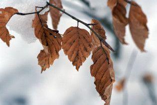Погода в Україні на суботу, 12 грудня