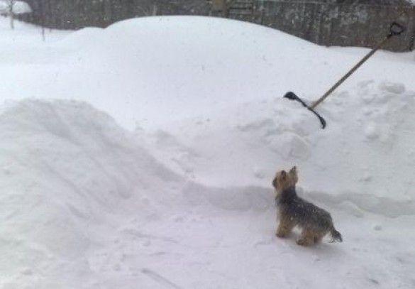 Снігопад у Донецьку