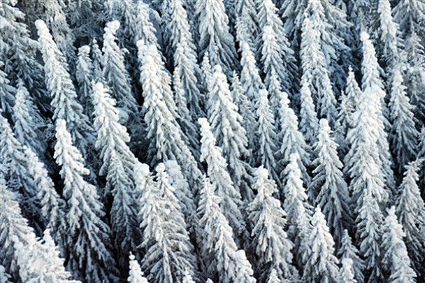 Тиждень у фотографіях. 14-20 грудня