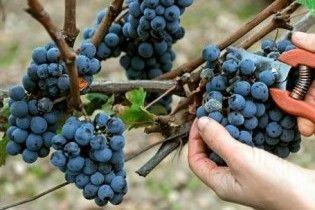 Виноробам зменшать ліцензію на торгівлю в 640 разів