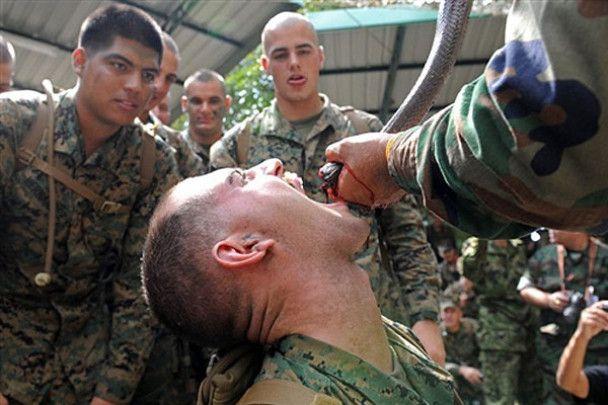 Військових вчать їсти скорпіонів