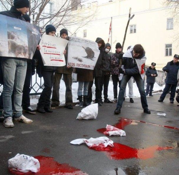 Кияни розіграли під посольством Канади криваве полювання на тюленів