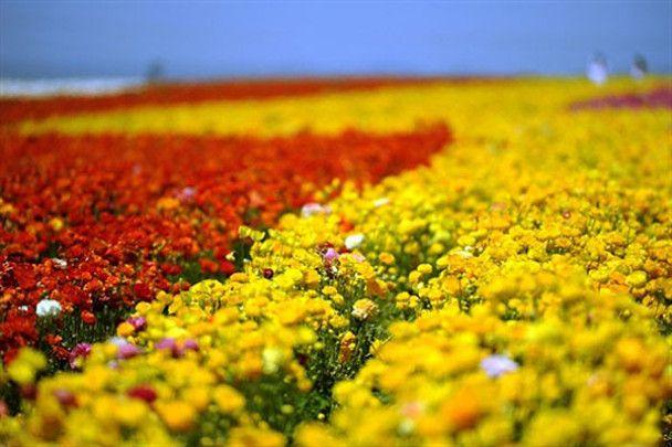 Свято метеликів і квітів