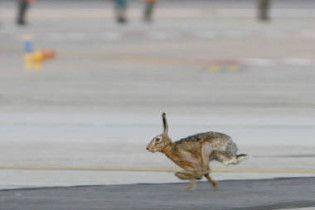Літак з італійськими політиками зіткнувся із зайцем