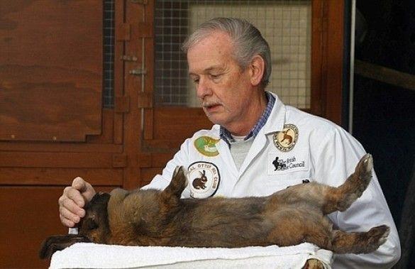 заклинатель кроликів Фото: SWNS
