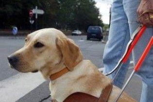 Австралійський ресторан покарали за дискримінацію собаки
