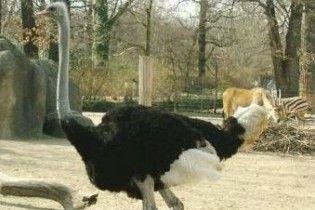 У домі Бакієва знайшли екзотичний зоопарк
