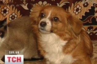 Луцькі комунальники розстрілюють безпритульних собак на очах у дітей