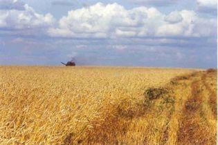 Уряд створить резерв зерна