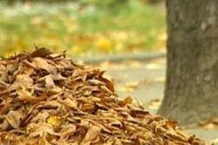 Чим небезпечне жовте листя (відео)