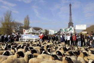 Ейфелеву вежу окупували вівці (відео)