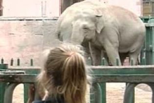 В Одесі помер слон (відео)