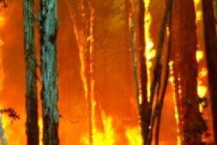 В Киеве подожгли подъезд (видео)