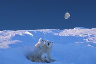 Глобальне потепління на планеті вповільнилося